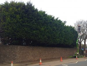 Hedge trimming pembrokeshire