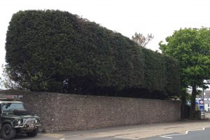Hedge cutting Pembrokeshire