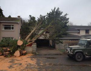Storm Failed Cypress