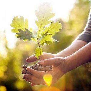 Tree planting Pembrokeshire
