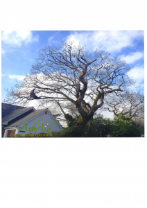 Tree Surgeons Pembrokeshire